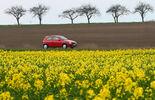 Auto und Rapsfeld