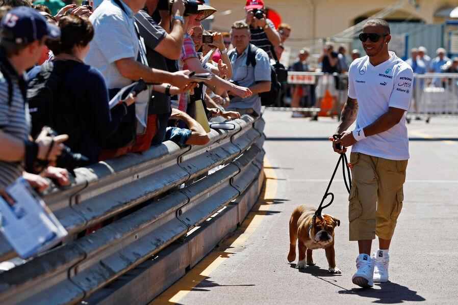 Formula 1- Season 2013 - Lewis Hamilton mit Hund Roscoe Formel 1 GP Monaco 22 Mai 2013 19 fotoshowImageNew 53870011 686716